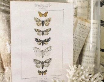 Vintage Botanical Print Moth Wall Art Sign Wood Sign Farmhouse Decor Natural History Book Page Fixer Upper Decor