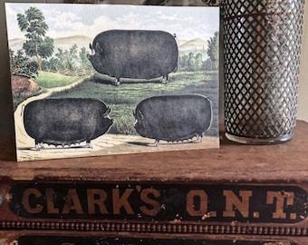 Vintage PIG Wood Sign Primitive Farmhouse Decor Illustration Book Page Wall Art Print Pasture Farm Antique Image Black Hog