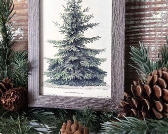 Vintage Christmas Tree Sign PINE TREE Frame Farmhouse Christmas Winter Decor Barn Wood Rustic Primitive Framed Sign Botanical Illustration