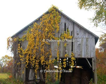"Barn Photography  ""Tobacco Barn with Veil"""