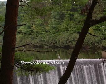"Wildlife Photography ""Blue Heron on the Edge"""