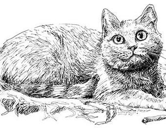 American Shorthair Cat Illustration Black/White Pen Ink