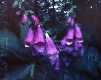 Purple Foxglove Flower in Washington: Double-Exposed 120mm Digital Print on Luster Paper // Nature Photography, Meditation, Interior Decor