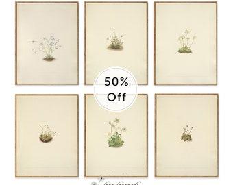 Minimalist Print Set - Set of 6 Prints, Minimalist Botanical, Printable Botanical Prints, Plant Prints, Plant Illustration, Simple Art 11x14