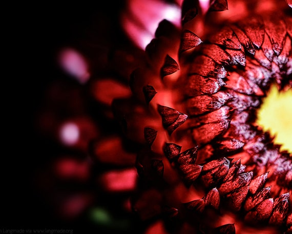 Flower Photography Red Flower With Heart Tips Romantic Etsy