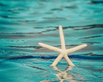 "Starfish Photography - white starfish 8x12 blue ocean prints beach photography 11x14 8x10 sea animal starfish photo 16x24 ""Catchin the Surf"