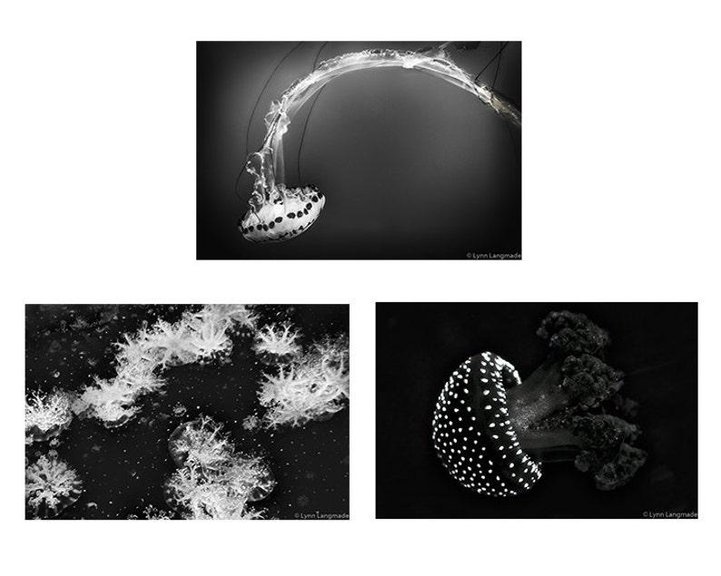 set of 3 black and white prints 11x14 jellyfish art 8x10 jellyfish wall decor 16x20 bathroom wall decor 5x7 Jellyfish Bathroom Print Set