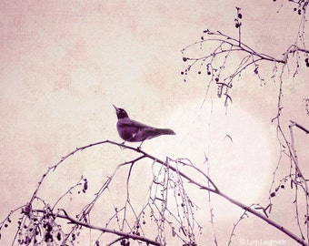 "Nature Photography - bird under a purple moon, purple photograph, minimalistic, bird wall prints, home decor, tree, night -  ""Illumination"""