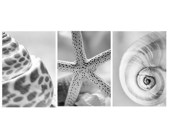 Shell print set set of 3 black and white prints 5x7 seashell