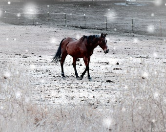 "Horse Art - brown horse snow winter photography 8x10 snowy horse print 11x14 animal wall art 16x20 5x7 nature photography ""Winter Walk"""