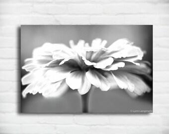"Flower Canvas Black and White - gray botanical wall art 16x24 large grey wall art 24x36 canvas wrap flower wall decor 8x12 - ""Antebellum"""