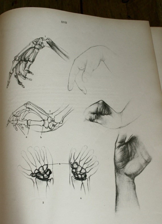 Vintage 1960 Anatomy For The Artist Book By Jeno Etsy