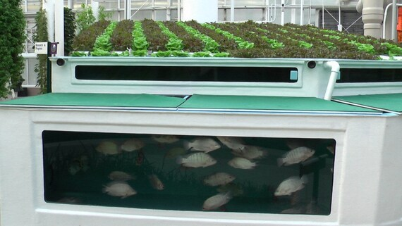 Soilless Gardening /& Fish Culture Hydroponics,Aquaponics,Aquaculture on CD