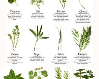 Herbs Herbal Medicines PDF Format Files Herb 30 Books Culinary Herbs Medicinal Garden