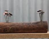 Timber mounted Fungi Money 11, coin mushrooms