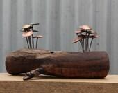 Timber mounted Fungi Money 10, coin mushrooms