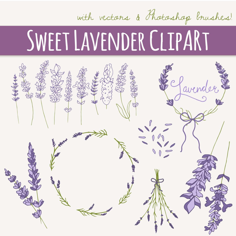 Lavender Sprigs Clip Art Set // Photoshop Brush PNG // Digital | Etsy
