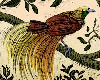 Bird of Paradise - Limited Edition Philosophy of Birds Giclee Print