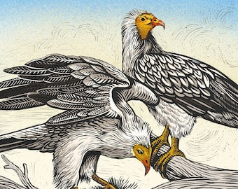 Egyptian Vultures - Limited Edition Philosophy of Birds Giclee Print