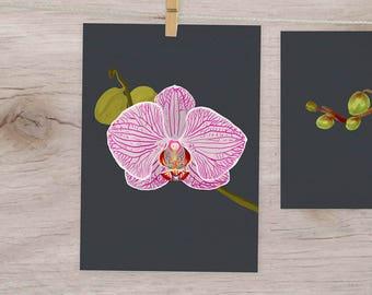 Orchid Art Print, Floral Poster, botanical print, flowers