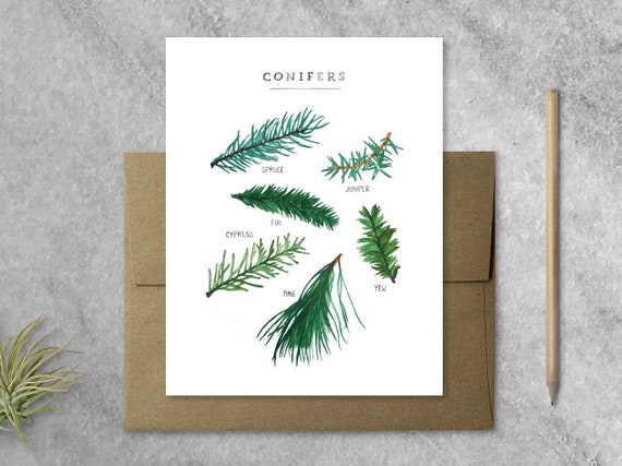 Boxed Christmas Cards.Boxed Christmas Cards Evergreen Boxed Greeting Cards With Kraft Envelopes Holiday Cards Set Of 8