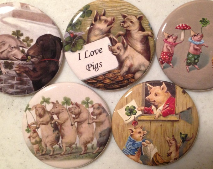 5 Pig Fridge magnets or pinbacks SET 3 w/Vintage pictures Pigs, hogs, 1.5 inch