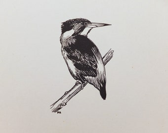 Kingfisher, Vintage Black and White Picture of birds, Gift for Nature Lover, Black and White Art, Natural History