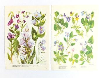 Botanical decor, Lilac flowers, floral decor, Botanical prints, Botanical illustrations, unframed pictures, purple art