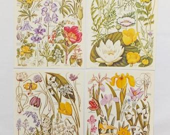 Vintage Flower pictures, Botanical Pictures, Set of vintage flower illustrations, colourful floral prints, Floral art