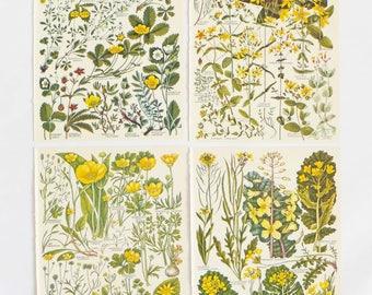 Yellow flowers, Botanical Drawings, Set of 4 vintage botanic illustrations, floral prints, Floral art