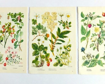 Food print, Berries print set, Fruits, Raspberry, Strawberry, Cloudberry, Botanical prints, Botanical illustrations, unframed pictures
