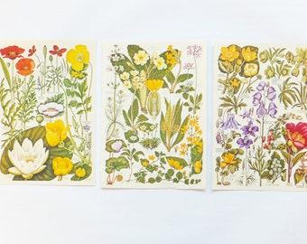 Spring flowers, Vintage Flower pictures, Botanical Pictures, 3 vintage flower illustrations, colourful floral prints, Floral art