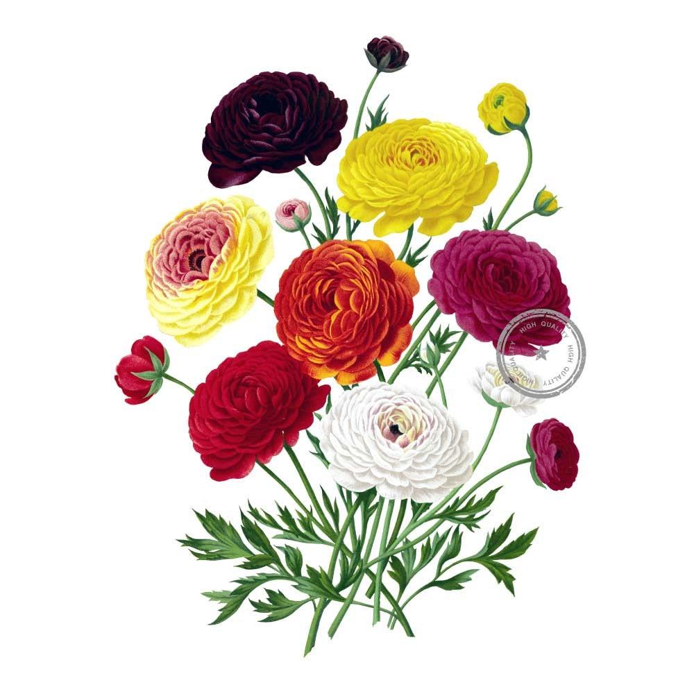 Ranunculus vintage clip art floral clipart flower bouquet etsy 50 izmirmasajfo