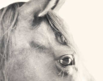Black and white fine art photograph of the wise eye of a beautiful horse. This would be beautiful large!