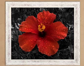 Red color splash Hibiscus Picture/poster 11x14