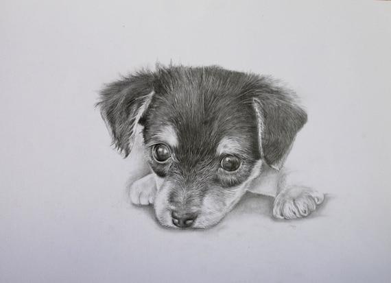 Yorkie Pup Pencil Dog Portrait Original Pencil Drawing Etsy