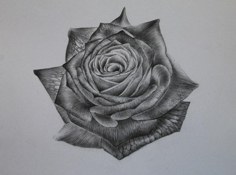 Sola Rosa Original Lápiz Dibujo Lápiz Grafito Flores Etsy