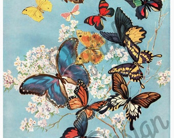 Digital Vintage 1910s Floral Butterfly Print Delineator Magazine Cover 1917 - Print at Home Decor - INSTANT DOWNLOAD