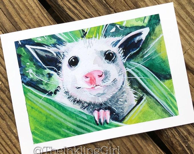 Pleasant Opossum 5x7 Art Print