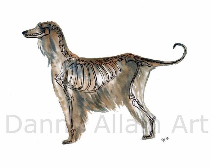 Afghan Hound Bones Art Print