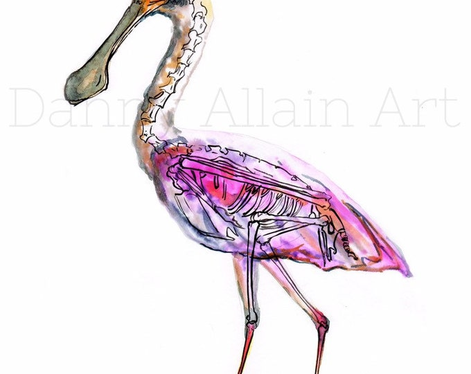 Roseate Spoonbill Bones Art Print