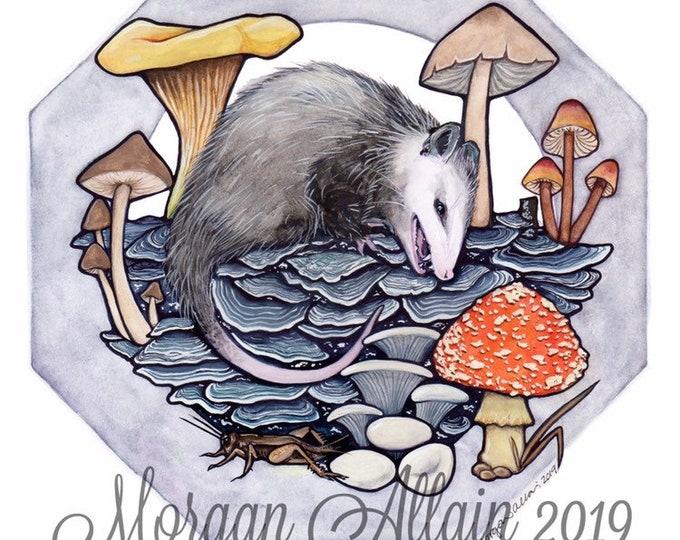 Opossum Kingdom