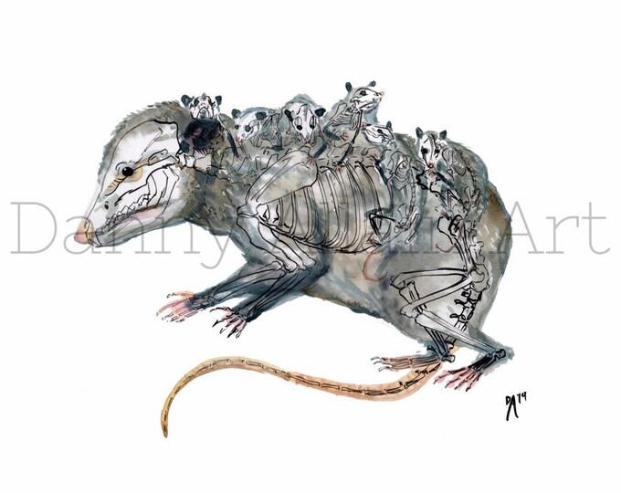 Opossum Bones Art Print