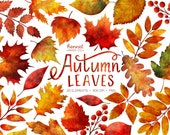Autumn Leaves Clipart - Watercolor Fall Leaves Clipart - Autumn Watercolor Clipart - Instant Download - Commercial Use - Hennel Paper Co.