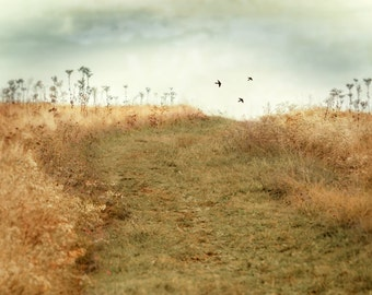 Field photography - Nature Photography - Landscape - Cottage Chic - Path