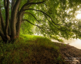 Nature Photography Maple Tree Magical Woodland Scene Fog Sunrise Healing Art Enchanted Forest Green Yellow Fairy Land River Trail