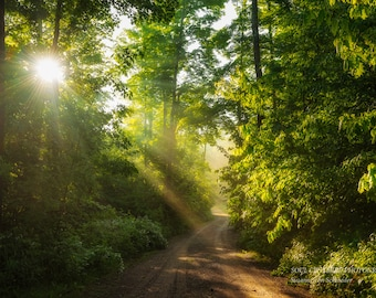 Nature Photography, Magical Woodland Scene, Rays of Light, Sunrise, Healing Art, Enchanted Forest, Green Yellow, Fairy Land, Cabin Decor