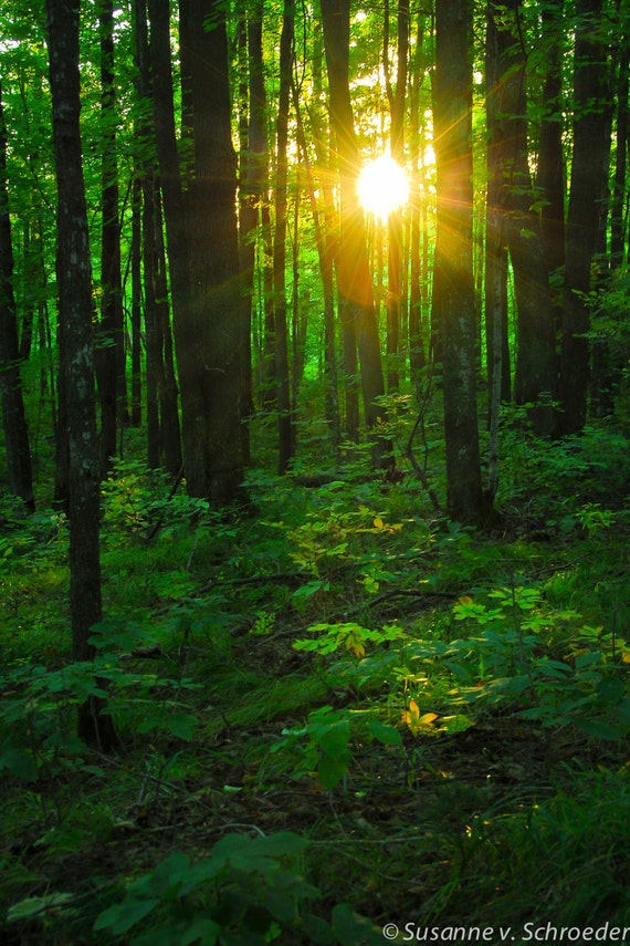 Nature Photography Sun Light In Forest Fine Art Print Photo