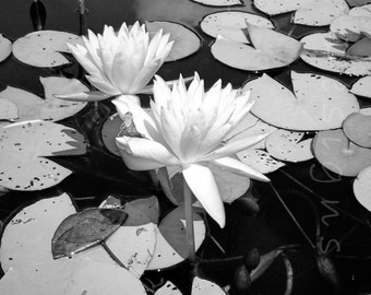 Black and white lilies - photography - lily pad - flower - nature - Botanical art - housewarming - bed and bath - kitchen and dining