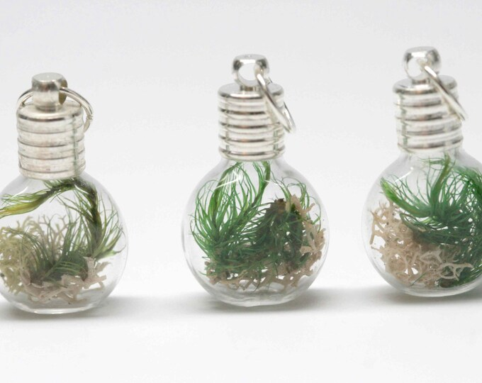 Terrarium Pendant with Silver Coated Necklace Chain
